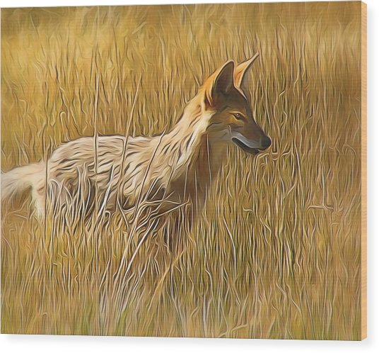Coyote Sunshine Wood Print