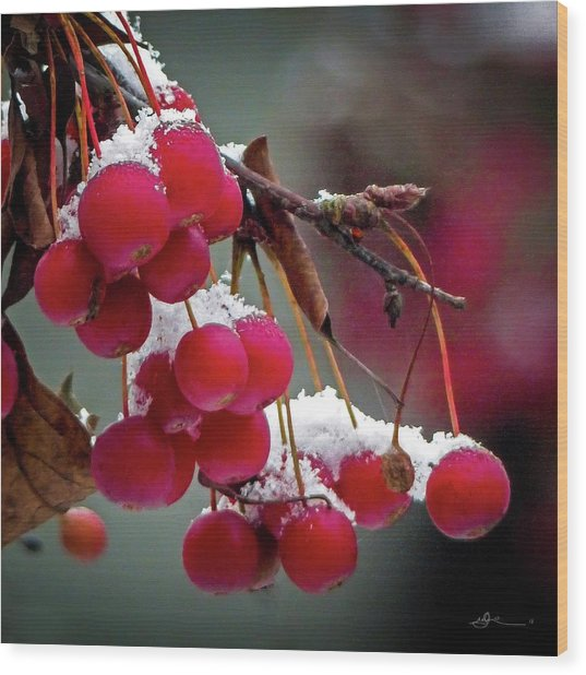 Crab Apples Snow Wood Print