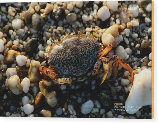 Crab On The Beach Wood Print