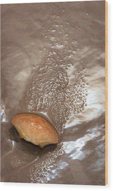 Crab Shell On Beach Wood Print