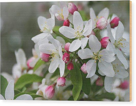 Crabapple Blossoms 12 - Wood Print