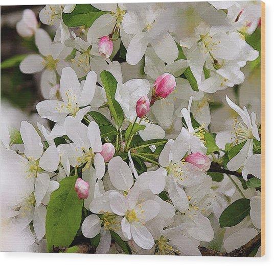 Crabapple Blossoms 5 Wood Print