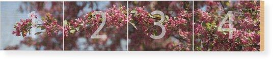 Crabapple In Spring Panoramic Map Wood Print