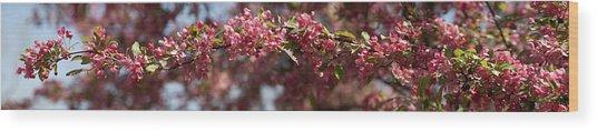 Crabapple In Spring Panoramic Wood Print