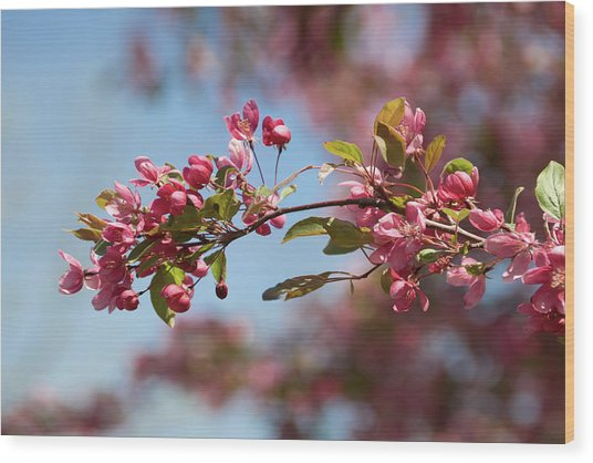 Crabapple In Spring Section 1 Of 4 Wood Print