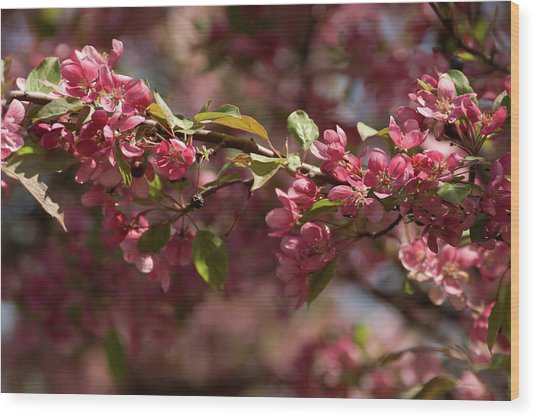 Crabapple In Spring Section 3 Of 4 Wood Print