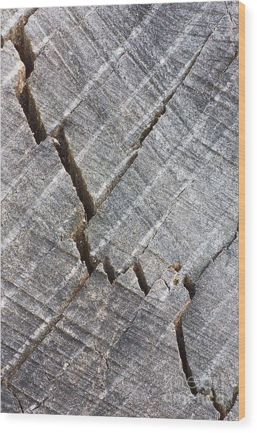Cracked Wood Print by Steven Dillon