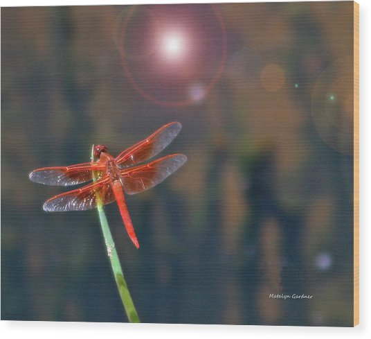 Crackerjack Dragonfly Wood Print