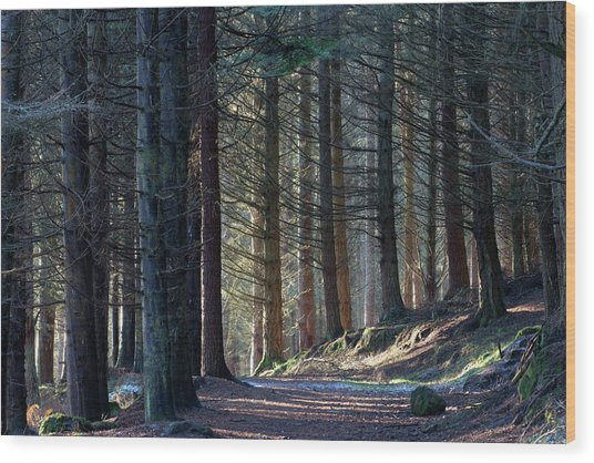 Wood Print featuring the photograph Craig Dunain - Forest In Winter Light by Karen Van Der Zijden