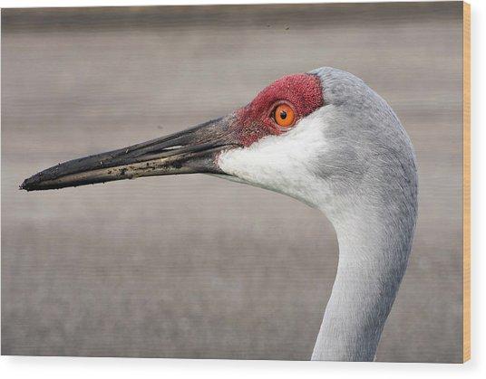 Crane Closeup Wood Print