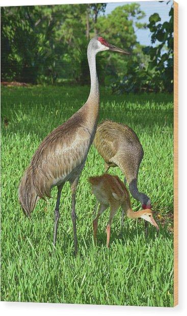 Crane Family Picnic Wood Print