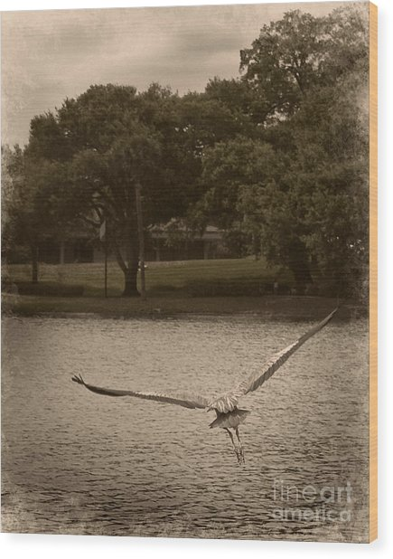 Crane In Flight Wood Print