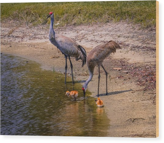 Cranes In The Lake Wood Print