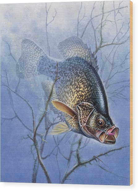 Crappie Cover Tangle Wood Print
