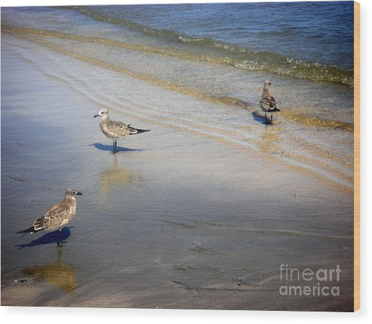 Creatures Of The Gulf - Which Way Wood Print by Lucyna A M Green