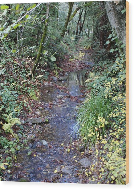 Creek On Mt Tamalpais 2 Wood Print