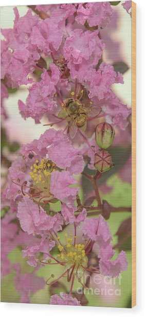 Crepe Myrtle And Bee Wood Print
