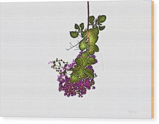 Crepe Myrtle In Oil Wood Print