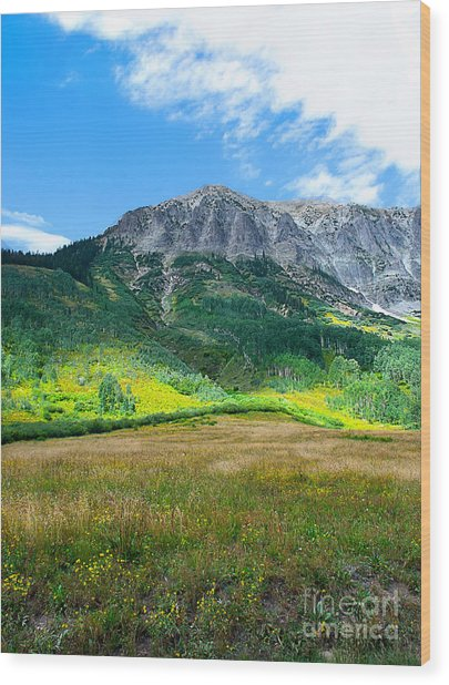 Crested Butte Aspens Wood Print