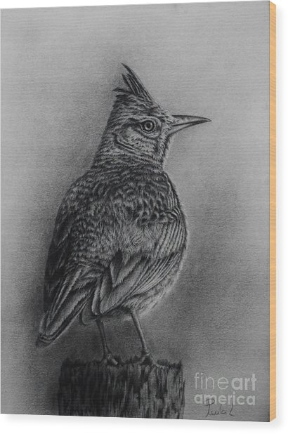 Crested Lark  Wood Print