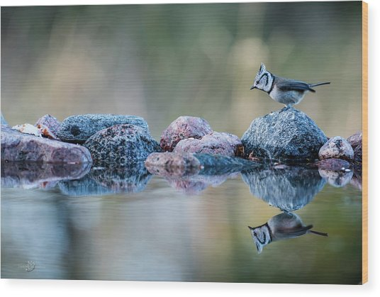 Crested Tit's Reflection Wood Print