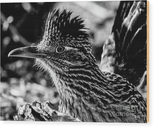 Cresting Roadrunner, Black And White Wood Print