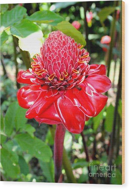 Crimson Bloom Wood Print