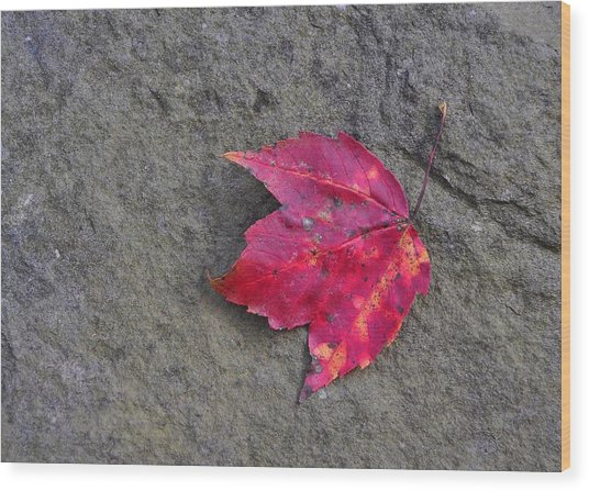 Crimson Wood Print by JAMART Photography
