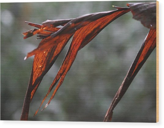 Crimson Leaf In The Amazon Rainforest Wood Print