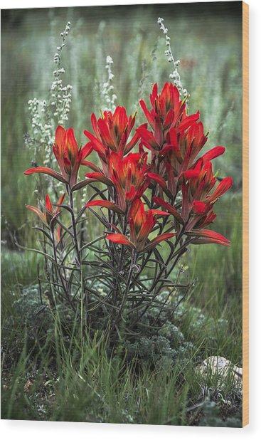 Crimson Red Indian Paintbrush Wood Print