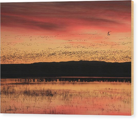 Crimson Sunset At Bosque Wood Print