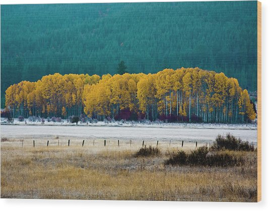 Crisp Aspen Morning Wood Print