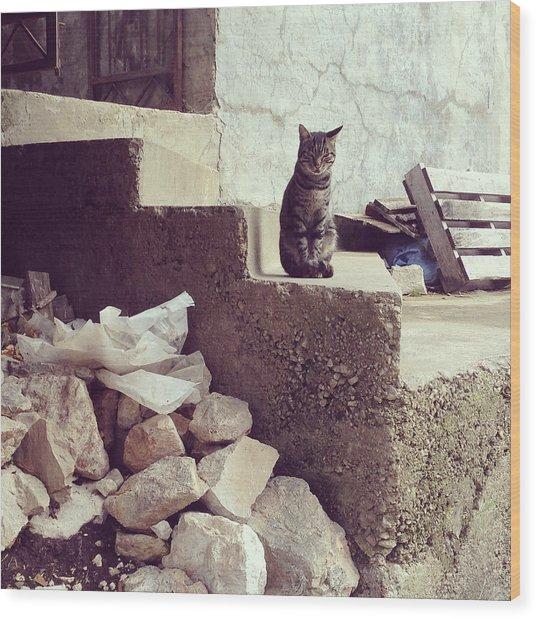 Croatian Cat Wood Print