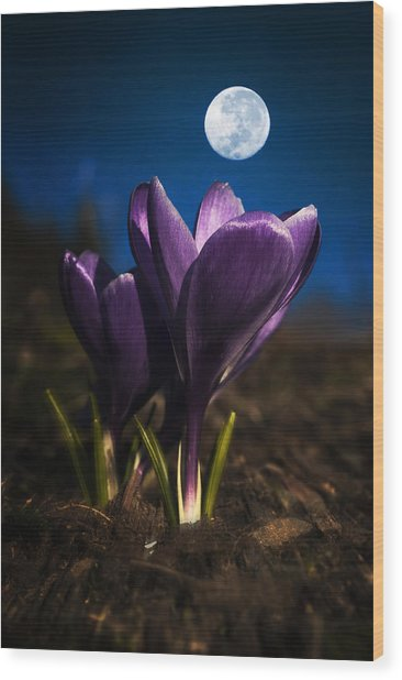 Crocus Moon Wood Print