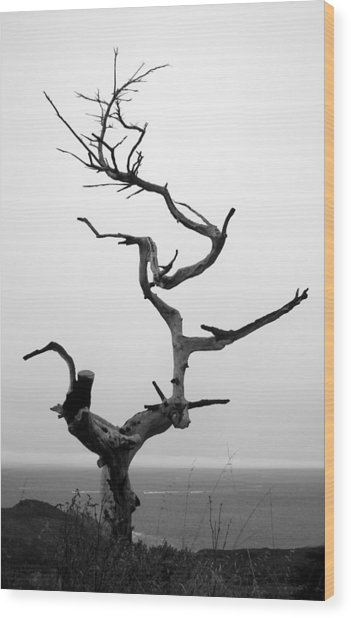 Crooked Tree Wood Print
