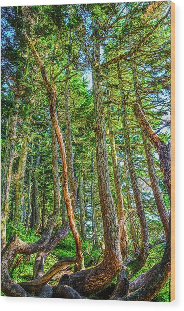 Crooked Trees Of Mt Roberts Wood Print