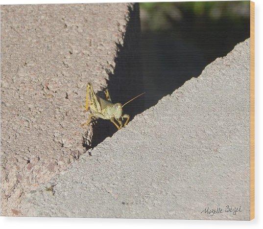 Cross Over Grasshopper Wood Print