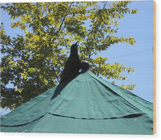 Crow On An Umbrella Wood Print
