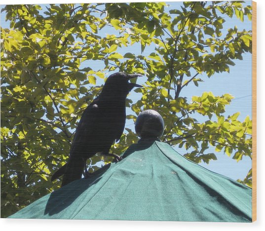 Crow On An Umbrella With Food Wood Print