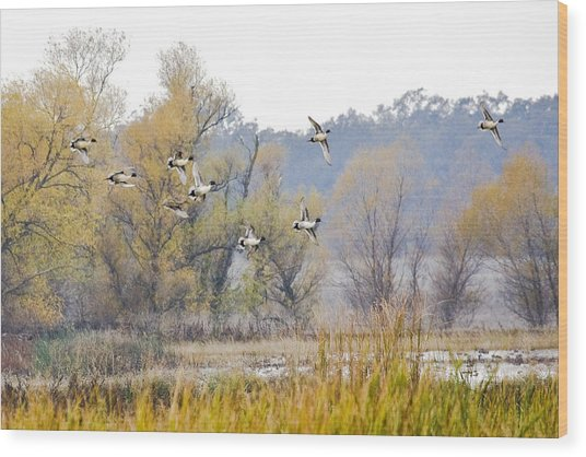Cruising The Pond Wood Print by Charlie Osborn