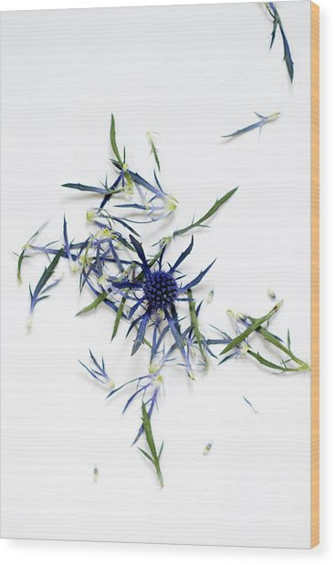 Crushed Blue Thistle Petals Wood Print