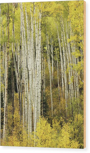Crystal Aspens Wood Print