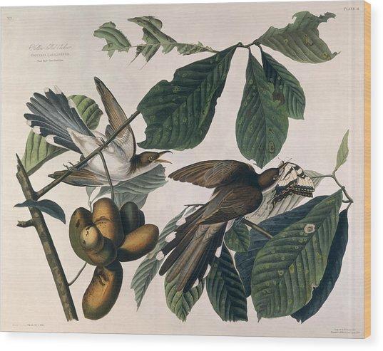 Cuckoo Wood Print