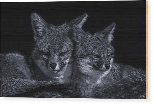 Cuddle Buddies  Wood Print