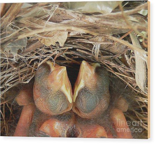 Cuddling Cardinals Wood Print