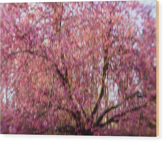 Columnar Sargent Cherry 2 Wood Print