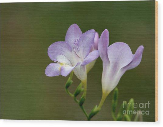 Cupertino Lavender Freesias Wood Print