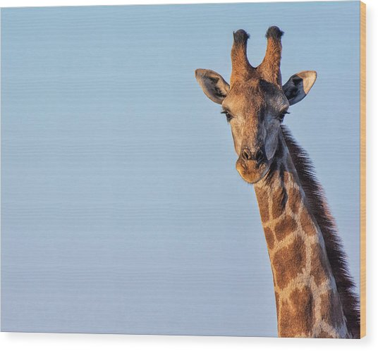 Wood Print featuring the photograph Curious 1 by Rand