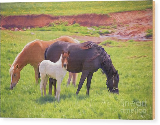 Curious Colt And Mares Wood Print