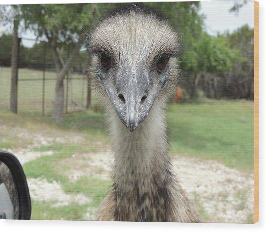 Curious Emu At Fossil Rim Wood Print